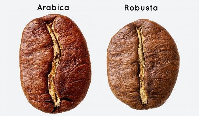 Je arabica lepší než robusta?